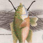 grasshopper fish